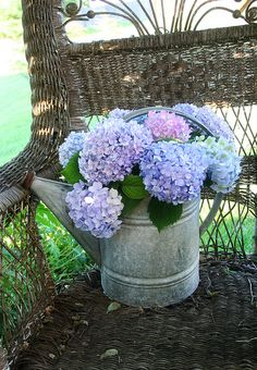 hydrangeas in a watering can