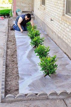 DIY Landscaping Project via MonicaWantsIt.com #landscapingprojects