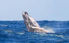 O que fazer em Porto Seguro: dicas para curtir esse destino o ano todo Whale, Animals, Tips, Destiny, Animales, Animaux, Animal, Whales, Animais