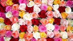 new Ideas flowers wallpaper iphone flora Wallpaper Gratis, Iphone Wallpaper, Widescreen Wallpaper, Beautiful Flowers Wallpapers, Beautiful Roses, White Roses, Red Roses, Rose Color Meanings, Wallpaper Fofos