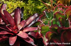 A star-shaped bromeliad and frilly kalanchoe are color-matched.