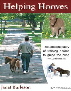 Miniature Guide Horses. This is awesome for people that are visually impaired and are allergic to dogs