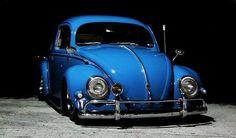 Beautiful bug !