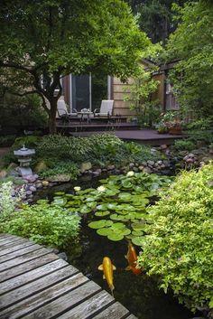Backyard Pond with Koi