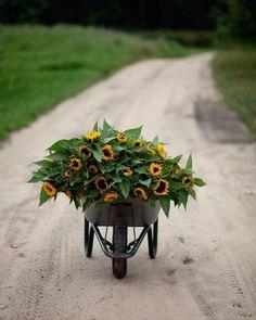 Dirt Road Anthem, Wheelbarrow, Trending Topics, Sunny Days, Flora, Around The Worlds, Herbs, Tumblr, Fan Art