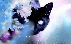 Beautiful Cat | Beautiful Cat - Cats Wallpaper (16095933) - Fanpop fanclubs