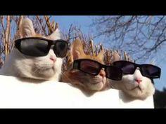 Des chats prennent le soleil. Normal