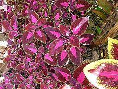 Plantas fáceis de cuidar – Parte 5