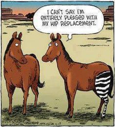 I Can't Say I'm Entirely Pleased With My Hip Replacement - Funny Memes. The Funniest Memes worldwide for Birthdays, School, Cats, and Dank Memes - Meme Funny Cute, The Funny, Funny Stuff, Get Well Funny, Fall Funny, Stupid Stuff, Super Funny, Funny Cartoons, Physical Therapy