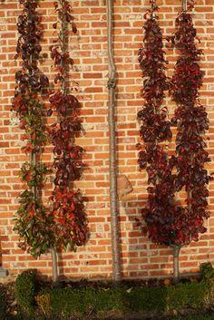 Espalier Fruit Trees, Firewood, Bing Images, Wreaths, Wallpaper, Home Decor, Woodburning, Decoration Home, Door Wreaths