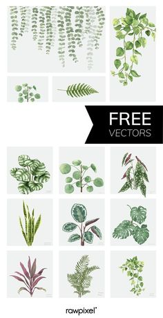 51 Trendy ideas for art gallery design layout free printables Free Printable Sticker, Printable Wall Art, Free Printables, Motif Jungle, Watercolor Plants, Free Watercolor Flowers, Decoration Plante, Plant Vector, Plant Painting