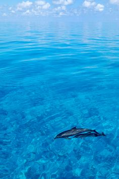 "Bahamas Dreamscape. While you appreciate how beautiful these dolphins are consider the plight of other dolphins. See the movie ""The Cove"" - by Scott Sansenbach"
