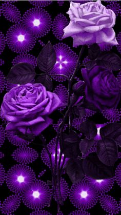 Pin Image by Celebrity Kusmia Purple Roses Wallpaper, Butterfly Wallpaper, Galaxy Wallpaper, Wallpaper Backgrounds, Beautiful Rose Flowers, Flowers Gif, Purple Flowers, Beautiful Nature Wallpaper, Beautiful Gif