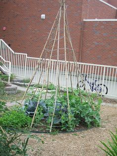 School garden teepee by greenwalksblog,