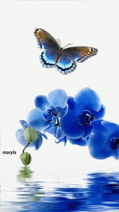 Butterfly Animation I love to see this. My simple little butterfly has been used to create a stunning animated gif Butterfly Gif, Butterfly Wallpaper, Blue Butterfly, Gif Animé, Animated Gif, Beautiful Butterflies, Beautiful Flowers, Blue Orchids, Blue Flowers