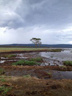 Lake Nakuru - National Park - Kenya, Africa