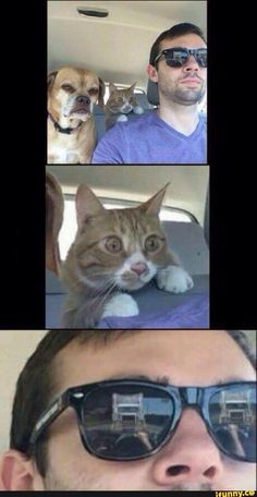 Funny Cat Memes 813814595147467432 - Just hang tight guys I know what I'm doing Source by matthieugrondin Funny Animal Jokes, Cute Funny Animals, Funny Animal Pictures, Animal Memes, Funny Cute, Funny Photos, Funny Images, Top Funny, Hilarious