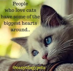 People who love cats have some of the biggest hearts around! @easyologypets