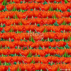 "Download the royalty-free photo ""red tulips abstract background. Digital Illustration"" created by sofiartmedia at the lowest price on Fotolia.com. Browse our cheap image bank online to find the perfect stock photo for your marketing projects!"