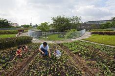 Estos niños van a un jardín ecológico en Vietnam- 3 #techosverdes