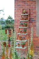 Créez vous-même cette étagère d'extérieur avec une échelle et quelques planches qui servira de lieu d'exposition pour vos belles plantes.