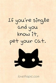 Pet your cat love funny cute cat single humor valentines day pinterest valentines pinterest quote