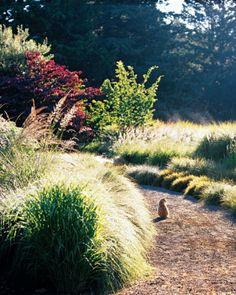 "Lucy, the Reids' cat, basks in the morning sun amid the rustle of grasses, including Calamagrostis x acutifolia ""Stricta,"" Miscanthus sinensis ""Gracillimus,"" Panicum virgatum ""Hanse Herms,"" and Deschampsia cespitosa."