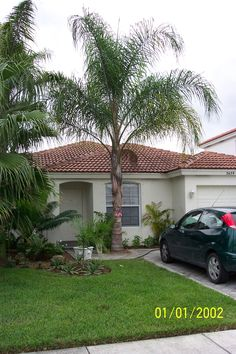 Queen Palm Tree Landscaping Ideas Google Search