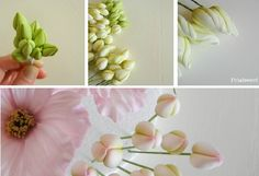 a compendium of sugar flowers (listed gumpaste flower varieties and their tutorials)