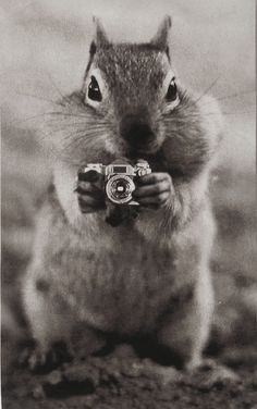 Normally, we take pictures of the squirrels! Now, this little guy has a camera of his own! My kind of squirrel! Squirrel Pictures, Animal Pictures, Cute Pictures, Cute Creatures, Beautiful Creatures, Animals Beautiful, Baby Animals, Funny Animals, Cute Animals