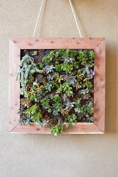 DIY Vertical Succulent Garden Tutorial.  From Home Depot  You can make any size you want , but I would line the box with plastic