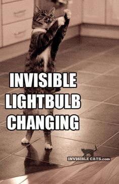 Invisible Cats                                                                                                                                                     More