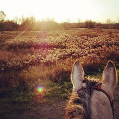 the best views in life are seen from between horses ears