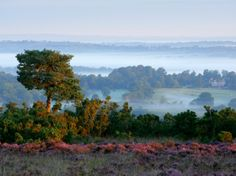 WALK THROUGH ENGLAND'S ASHDOWN FOREST  England  Britain's most heart-warming walking path may be through southeast England's Ashdown Forest, a public park that inspired the Hundred Acre Wood in AA Milne's series of Winnie the Pooh children's books.