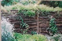 how to build a brush wood fence (with sweet autumn clematis to soften the look)