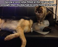 #poordog #naughtycats