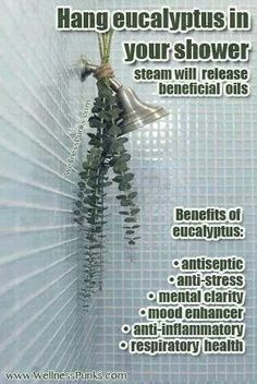 Eucalyptus shower