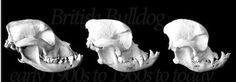 brachycephalic breeds and BAUOS Such as Pug's, Bull Dog's etc.