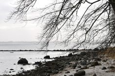 En vinterdag på Helnæs  #tv2vejret #visitfyn #fyn #nature #landscape #nofilter #natur #denmark #opdagdanmark #dänemark #visitdenmark #fynerfin #assens #vielskernaturen #assensnatur #travelgram #vinter #winter #motivation #helnæs #januar #sea #seatrout