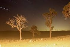 Image result for overexposed photo night Assessment, Elephant, Night, Painting, Animals, Image, Art, Art Background, Animales