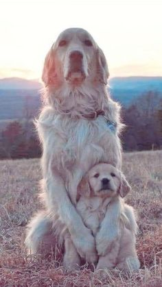 Cute Baby Dogs, Cute Baby Animals, Animals And Pets, Cute Puppies, Dogs And Puppies, Funny Animals, Doggies, Big Dogs, I Love Dogs