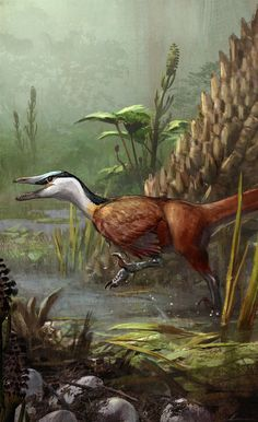 Buitreraptor                                                                                                                                                                                 More