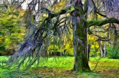 https://flic.kr/p/Ngv3tc | Just a Tree | Kuremaa Manor Park, Estonia. Created with Dynamic Auto Painter from my own photo