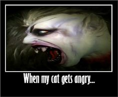 angry cat ...