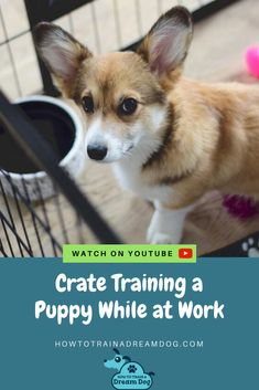 Crate Training A Puppy While at Work (Or Anytime You Leave the House!) // Crate train a puppy to keep them safe when you're at work. Crate training can help . Puppy Starter Kit, Training Your Puppy, Potty Training, Dogs Online, Cute Dog Photos, Getting A Puppy, Crate Training, Dog Crate, New Puppy