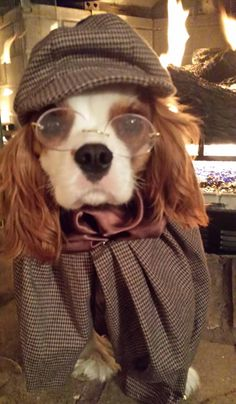 Dudley the Cavalier King Charles Spaniel