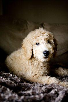I want to hug this dog.
