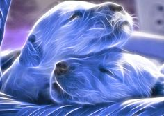 fractal animal art | blue Puppies photo animal-fractal-wallpaper-dog.png