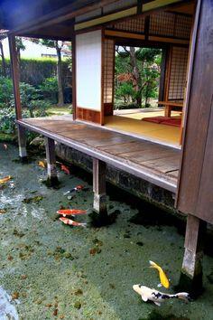 Lindas carpas sob casa japonesa.