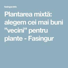 """Plantarea mixtă: alegem cei mai buni """"vecini"""" pentru plante - Fasingur Mai, Plant"""